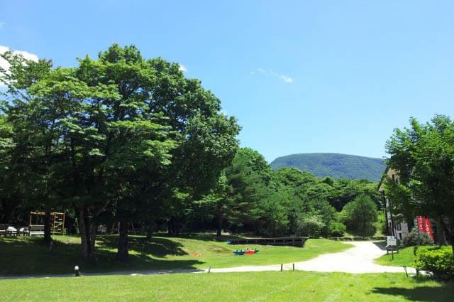 夏の金剛宝寺の写真