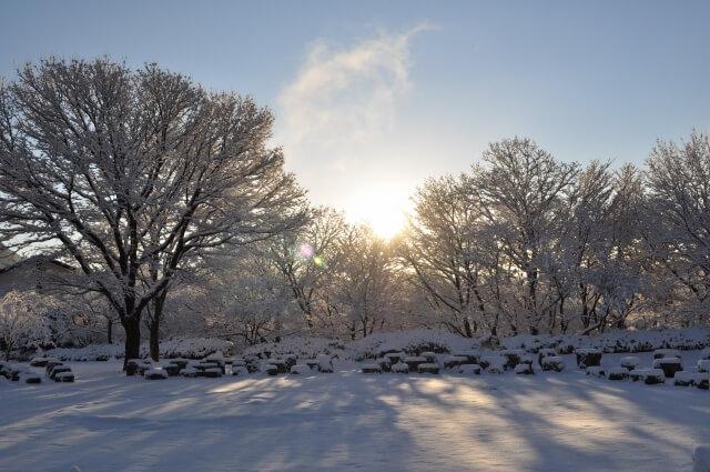 冬の金剛宝寺の写真