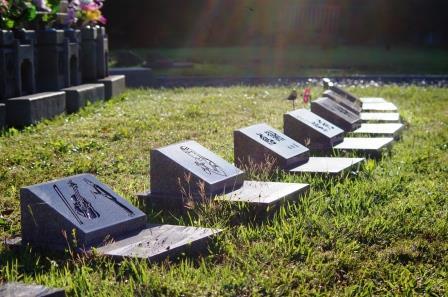 光に照らされる樹木葬の写真