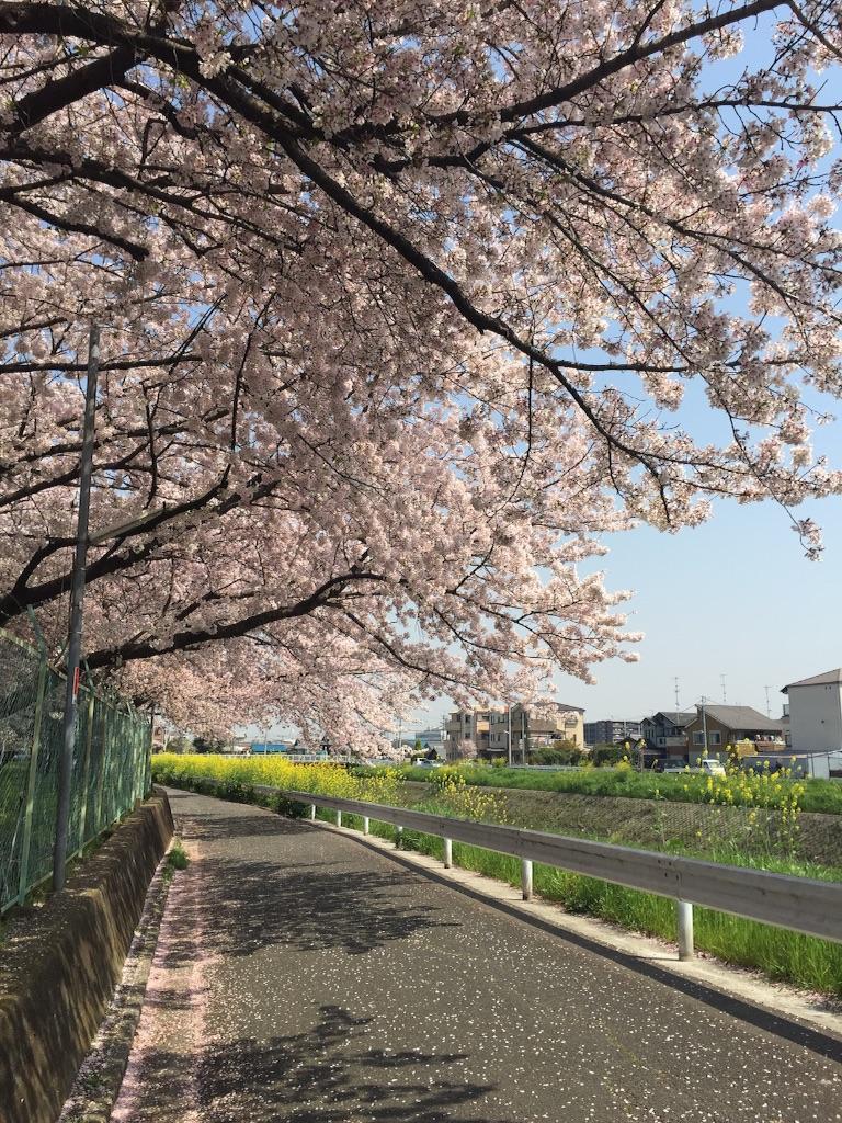 f:id:msatomi304:20170416213900j:image