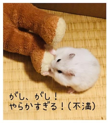 f:id:msatomi304:20181001213844j:image