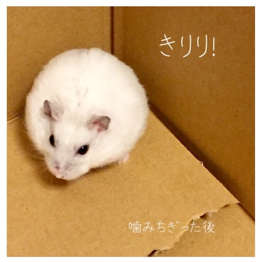 f:id:msatomi304:20181212220507j:image