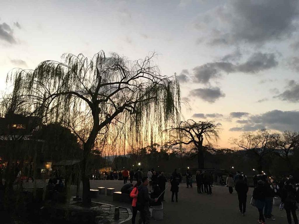 冬の枝垂れ桜