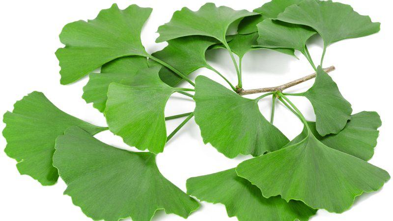 イチョウの葉