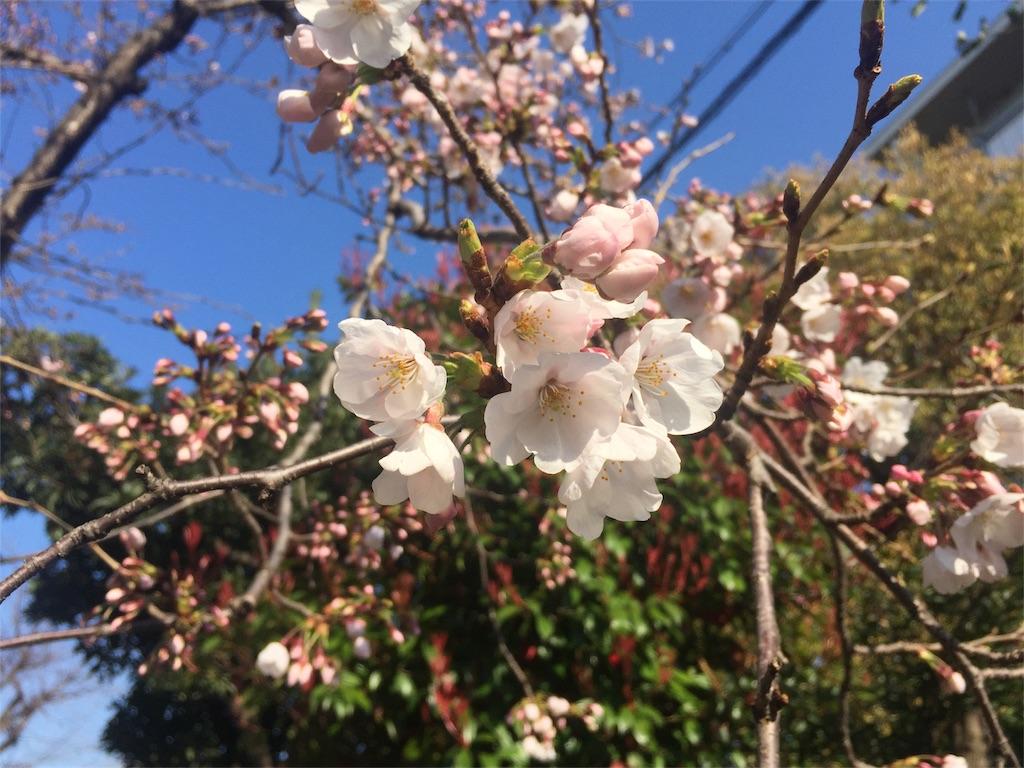 f:id:msokikaku:20170402090022j:image