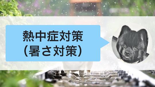 犬の熱中症対策(暑さ対策)
