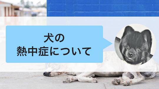 犬の熱中症について
