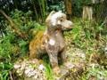 衣川三峰神社の狛狼