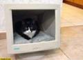 ネコ様のベッド