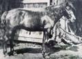 最後の南部馬「盛号」