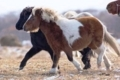 南部馬の血を受継ぐ「道産子」