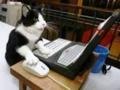 ネコ様に助けてもらう必要が