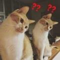 ネコと公務員の行動は意味不明