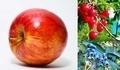前回紹介した果物