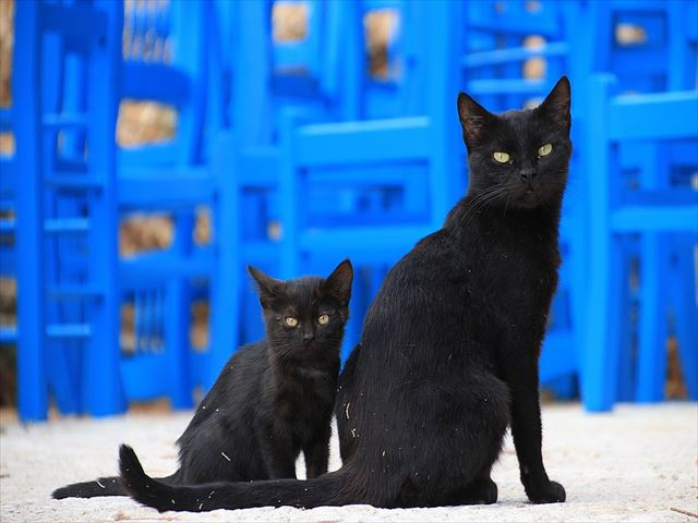 黒猫の親子