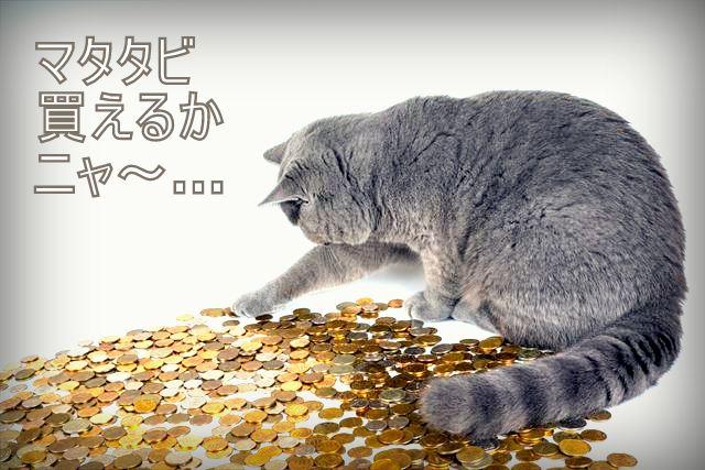 コインと猫