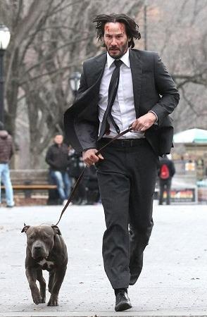ワンコNo.2)ジョンウィックの2台目の犬…ピットブル