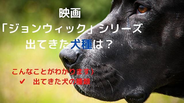 映画「ジョンウィック」シリーズに出てきた犬種は何?