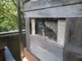 ニホンミツバチ 巣箱
