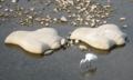チドリ石とサギ