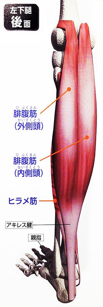 f:id:mugibatake40ro:20151202152646j:plain