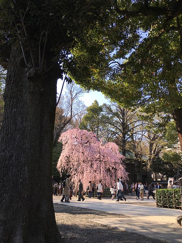 f:id:mugibatake40ro:20180326170308j:plain
