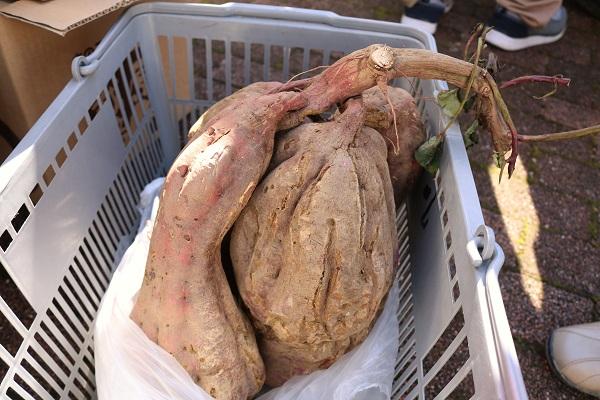 関市武儀地域自慢の野菜