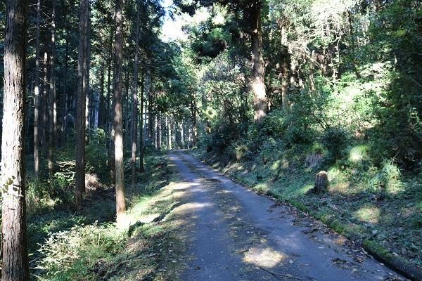 乙女滝への道中