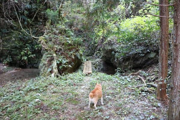 乙女滝に突如現れたドッグ