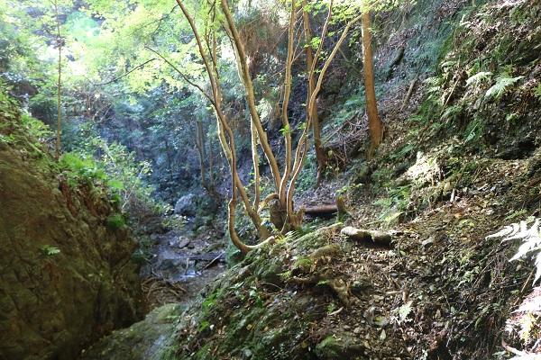 乙女滝への険しい道