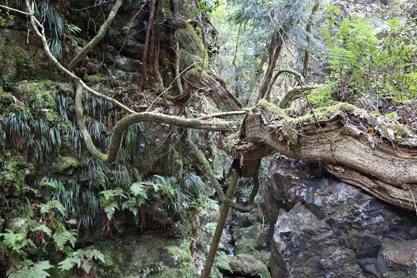 乙女滝の雄大な自然