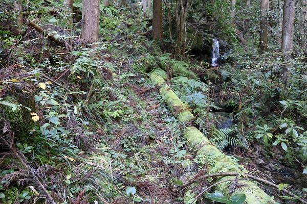 乙女滝への道を奥へ奥へと進む