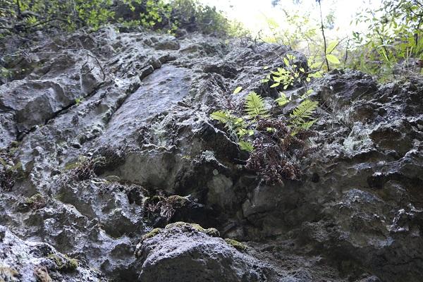 ゴツゴツした岩山