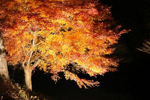 清兵衛渕の紅葉ライトアップ