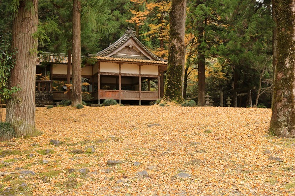 白髭神社のイチョウ絨毯