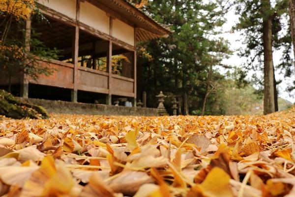 お宮の清水に敷かれるイチョウの絨毯