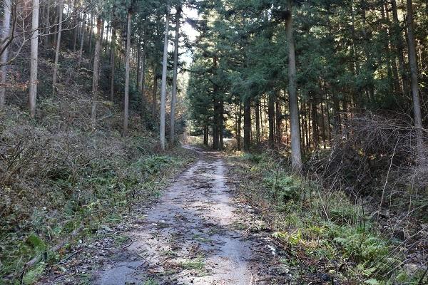 ギリギリ車で通れそうな平成山への道
