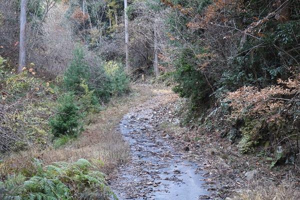 平成山遊歩道への細道