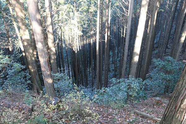 平成山遊歩道の天然の滑り台