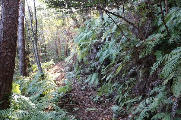 平成山遊歩道のジャングル感