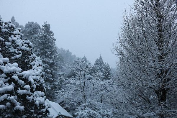 本堂から望む雪景色