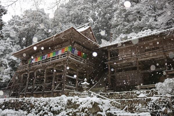 雪景色のフラッシュ撮影
