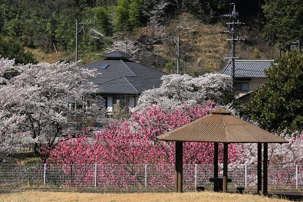 道の駅平成川向かいの東屋から