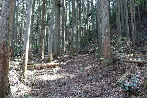 八大龍王神整備された登山道