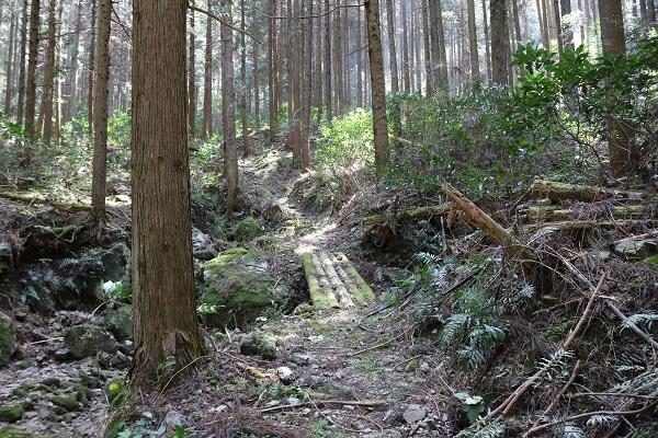 八大龍王の登山道をどんどん進む