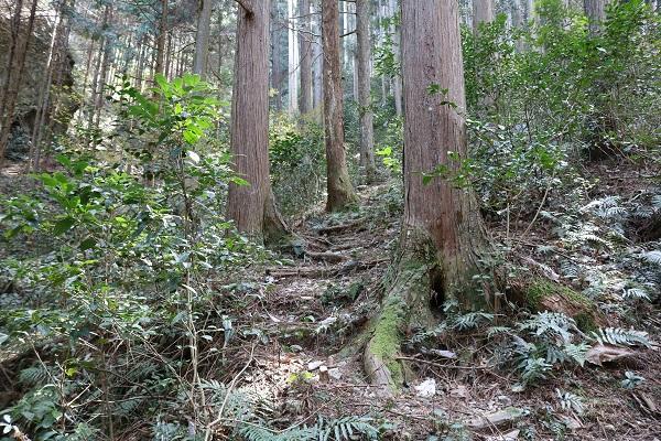 八大龍王神には急な登山道もあります