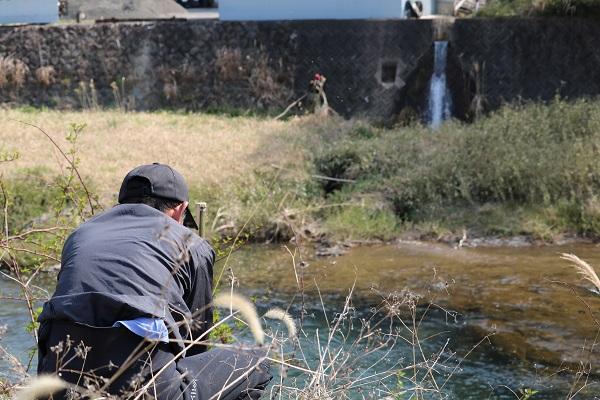 津保川に防鳥糸張り