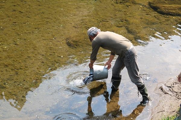 バケツ1杯で約5kgの稚鮎を放流