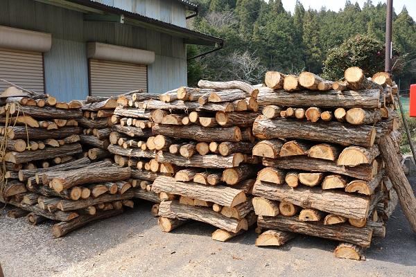 武儀の山から伐採された原木