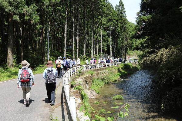 武儀倉川沿いを歩く参加者たち